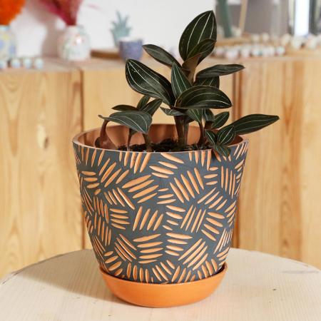 "Big terracotta pot ""Mojave"" +..."