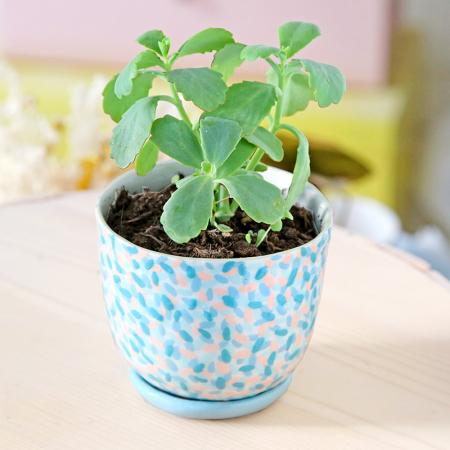 """Flower pot """"Rainforest"""" + matching plate"""