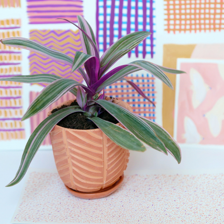 "Pot terracotta ""Chevrons"" +..."