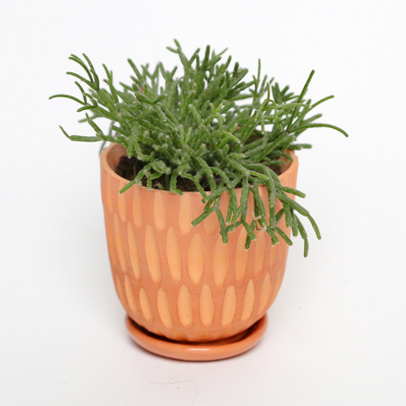 "Terracotta pot ""Lines"" + assorted plate"