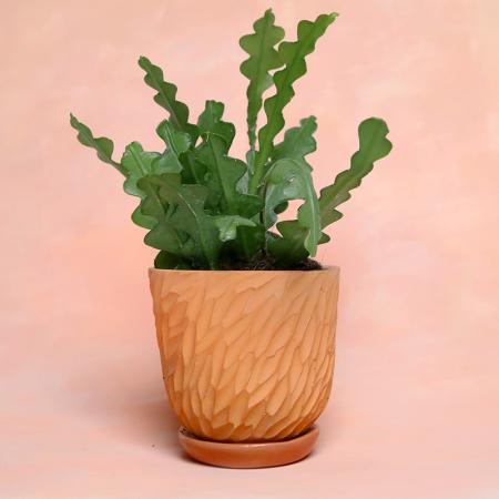 """Pot terracotta """"Écailles"""" + coupelle..."""