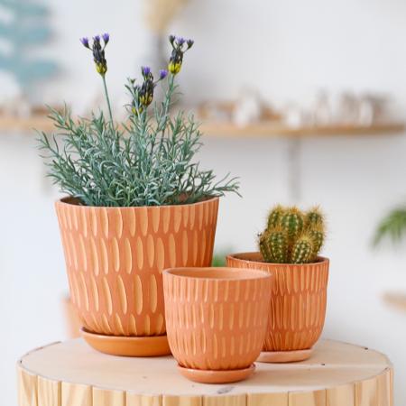 """Big terracotta pot """"Lines"""" + assorted..."""